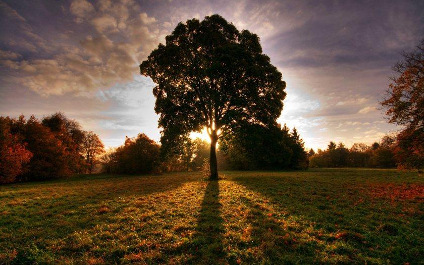 sun-ray-and-tree
