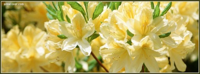 6247-cream-color-flowers